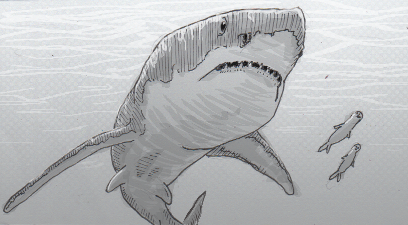Drawing of Carcharocles megalodon and unlucky seals