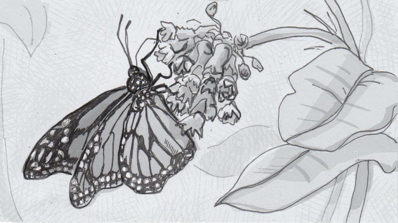 Drawing of a monarch butterfly on a flower