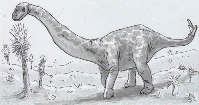 Drawing of a Spinophorosaurus nigerensis