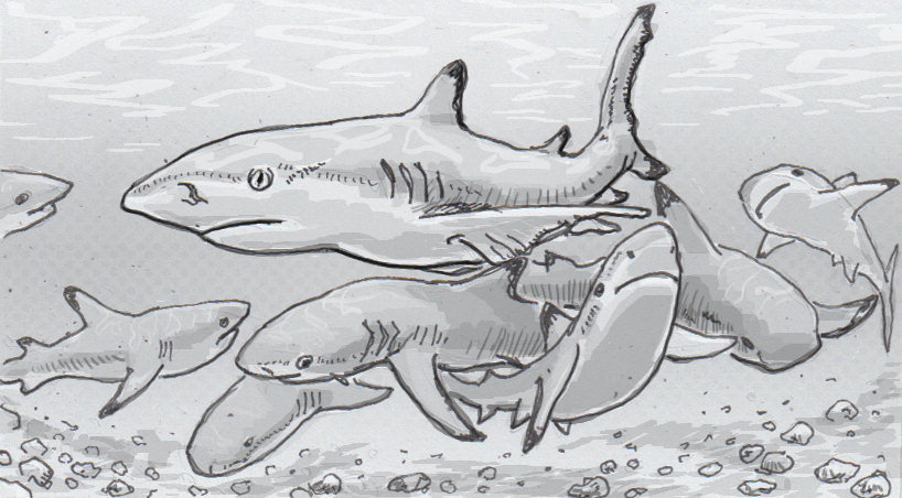 Drawing of black tip reef sharks