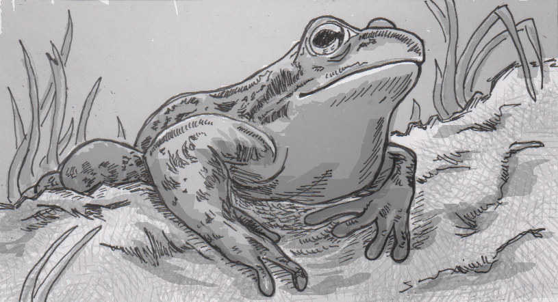 Frogs' and toads' color vision found to function in near total darkness