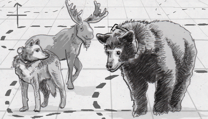 Drawing of a moose, wolf and black bear being tracked online
