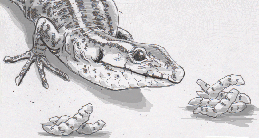 Drawing of a ruins lizard picking maggots