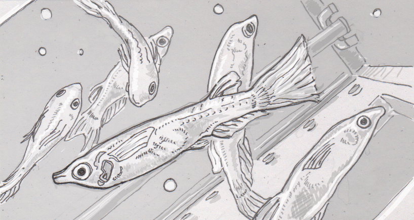 Drawing of medaka fish on the ISS