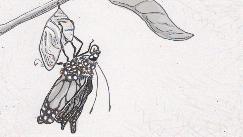 Drawing of a butterfly emerging from a chrysalis