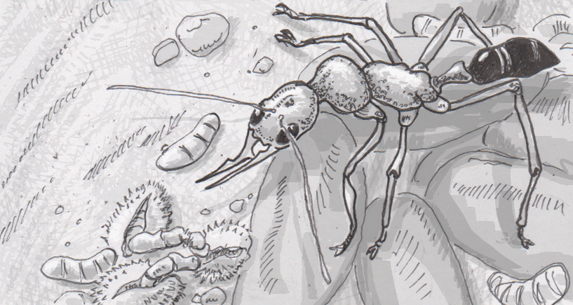 The many ways that ants select and make new mothers