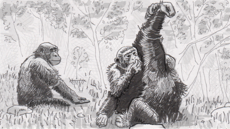 "Drawing of grooming chimpanzees in an ""arm up"" positition"