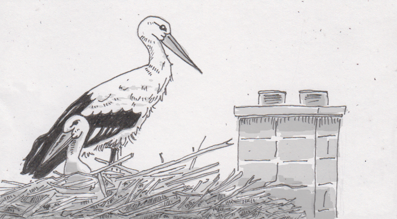 Drawing of two roosting storks on a roof