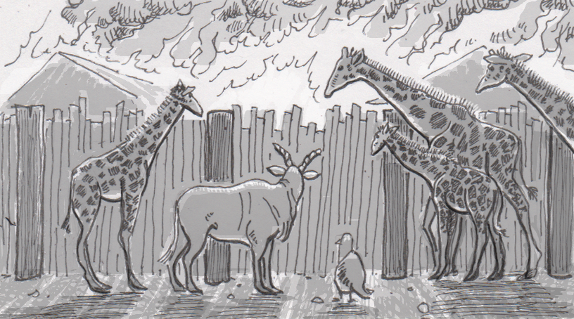 Drawing of giraffes and an eland watching a fire near the Oakland Zoo