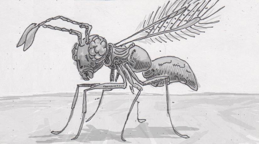 Measuring the anatomy of the most minuscule microinsects