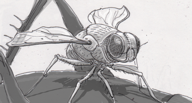 Directional microphones may not be able to match the aural acuity of this parasitic fly
