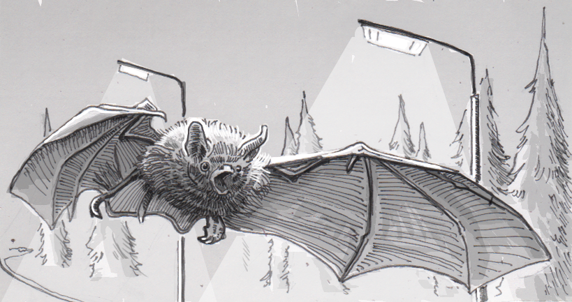 Drawing of a Natterer's bat