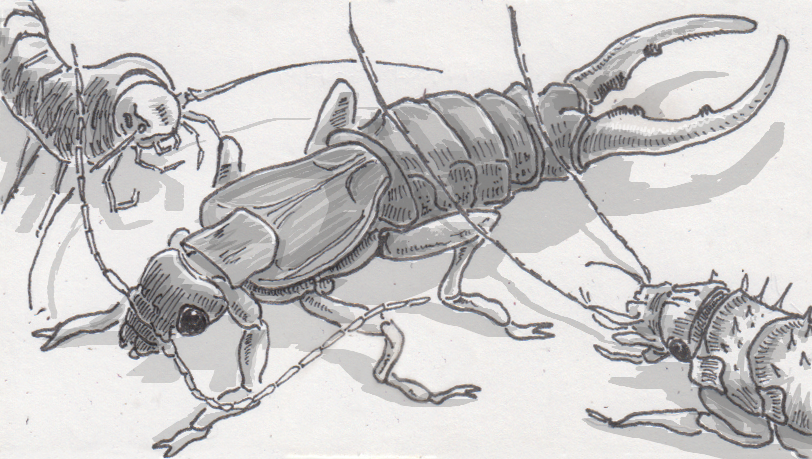 Assessing the imagined ferocity of several local insect species