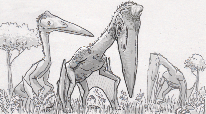 Identifying a pterosaur from a pelvis evolved for walking and leaping