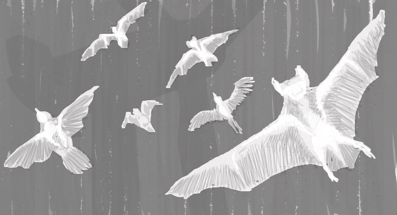 Thermal imaging of bats and birds