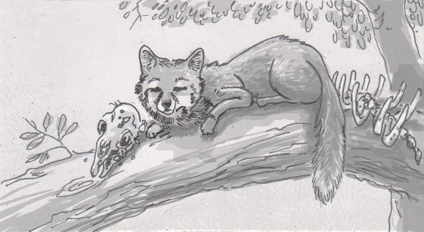 Gray fox specializations optimize the all that time they spend in trees
