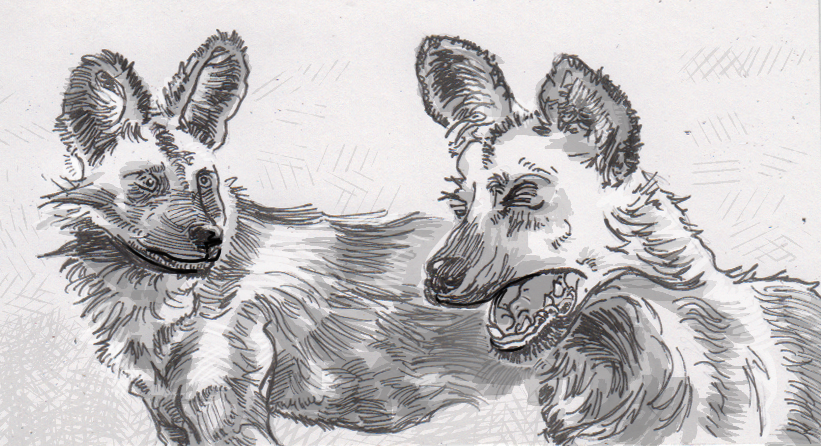 African wild dogs voting