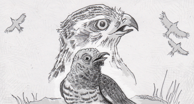 Cuckoos copy the sounds of bigger animals to keep their eggs, and themselves, safe from harm