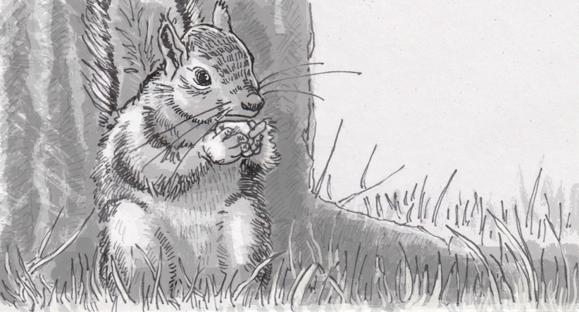 Squirrels' food storage strategies classify nuts by type and location