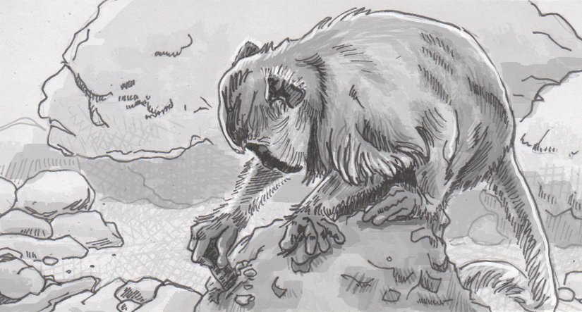 Tool-wielding monkeys are reshaping their local supplies of shellfish