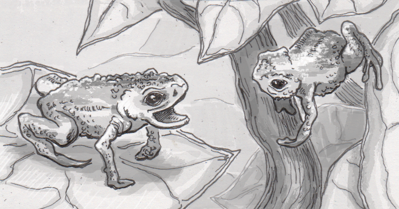 Poisonous frog adaptations block harm from their toxins, as well as hearing their own voices
