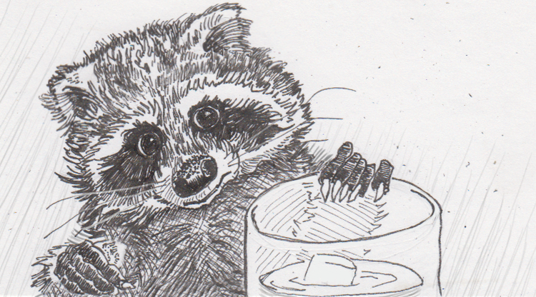Results are surprisingly mixed for raccoons tasked with retrieving rewards by raising water