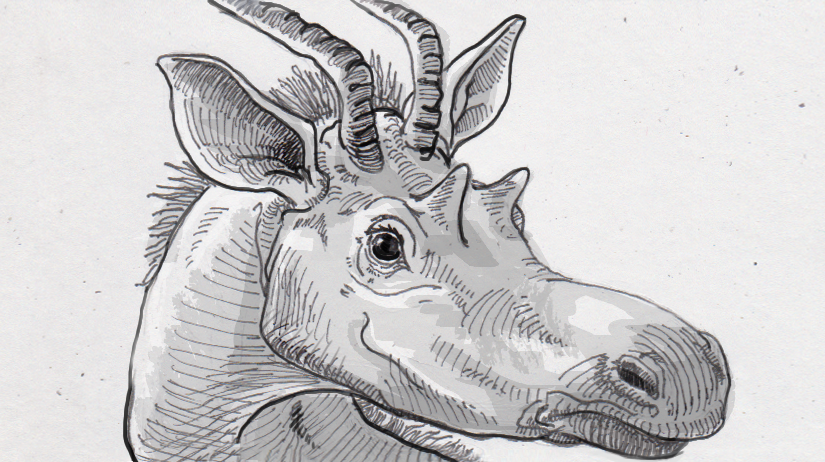 Decennatherium rex prominently placed in the giraffid family tree thanks to the fancy features on its face