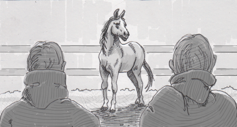 Isolating the social signals that horses pick up from people's posture