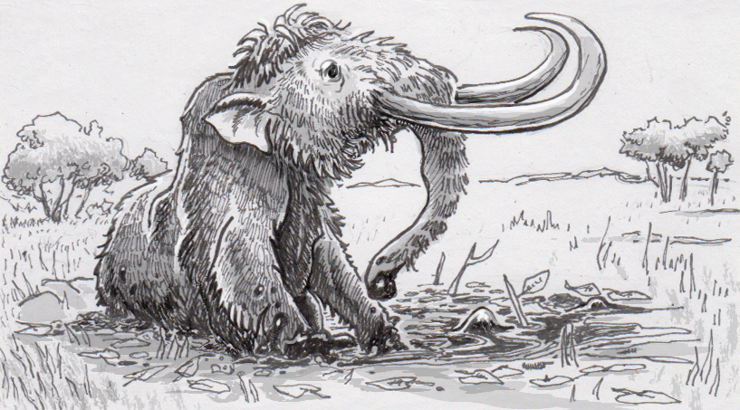 Most of the mammoths found trapped in hazardous terrain turn out to be male