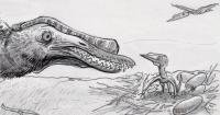 Adult and hatchling Hamipterus tianshanensis