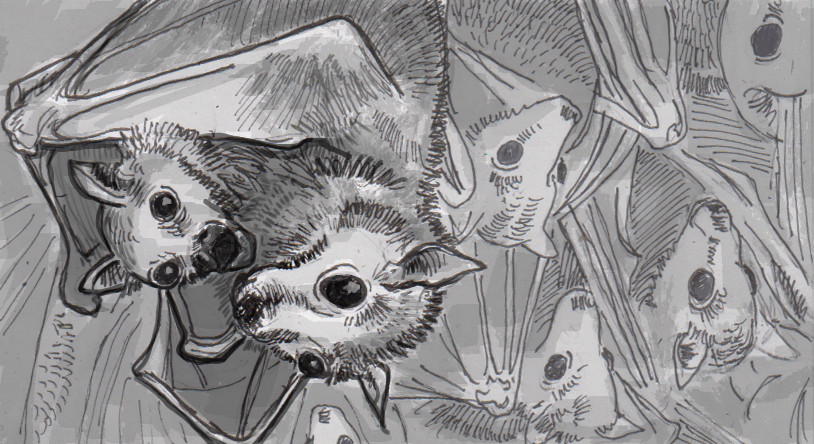 Like humans, baby bats pick up more speech patterns from their peers than from their mothers