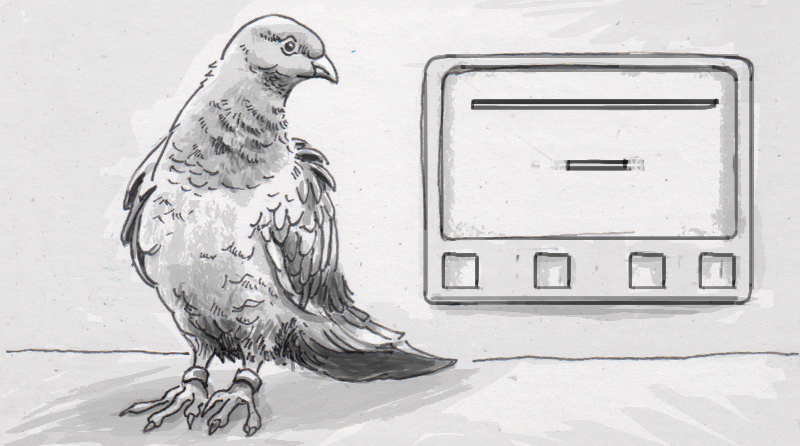 Pigeons parsing time and space suggest that our brains might not be as special as we thought