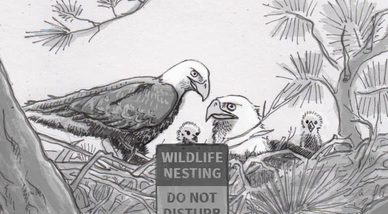 Differing degrees of intervention needed to protect endangered birds' nests
