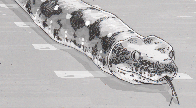 Boa constrictor wearing motion tracking dots