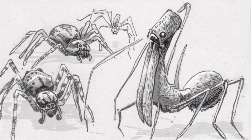 The wolf, pirate and pelican spiders that prey upon their eight-legged peers