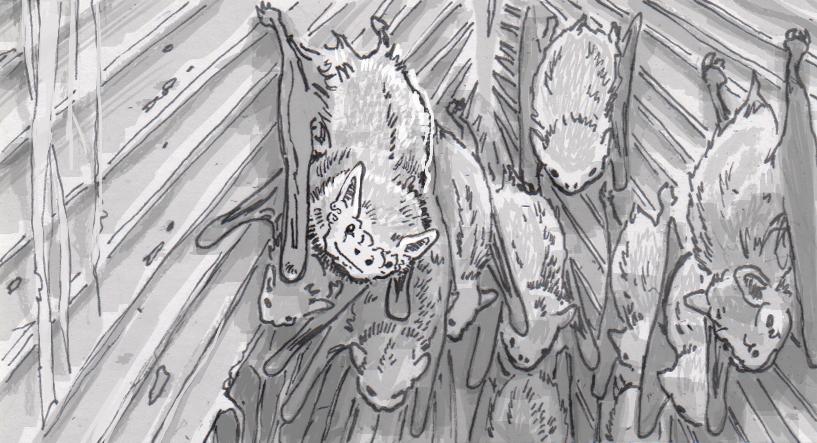Bat feces is a crucial fertilizer for Cambodian farmers