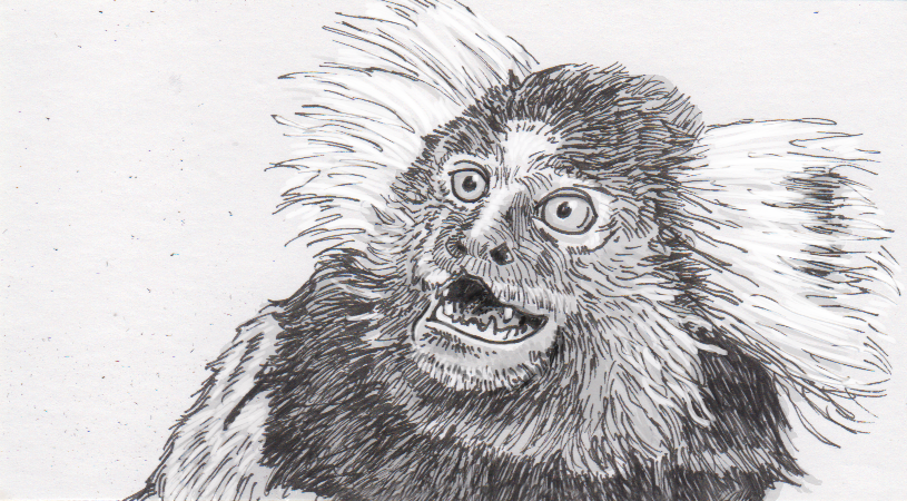 Making sure we can measure how marmosets manage their speech