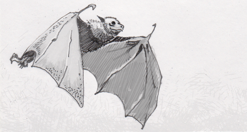 Bat immune systems can safely endure viruses in order to enable flight