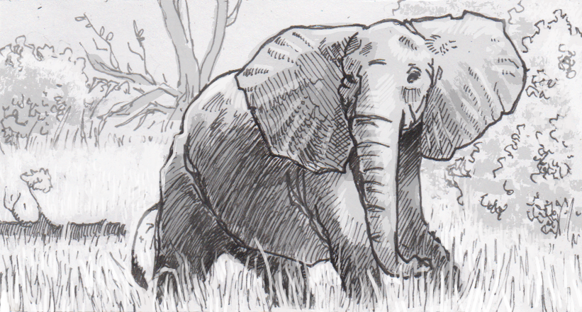 Tuskless African elephant