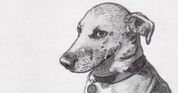 A drawing of a skeptical dog looking at the viewer