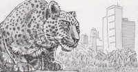 Drawing of a leopard in Mumbai