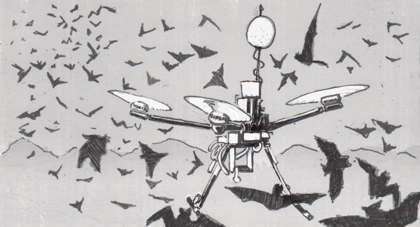 Chirocopter drone flying with Brazilian free-tailed bats