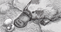 Drawing of a platypus and hatching egg