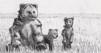 Brown bears in a field