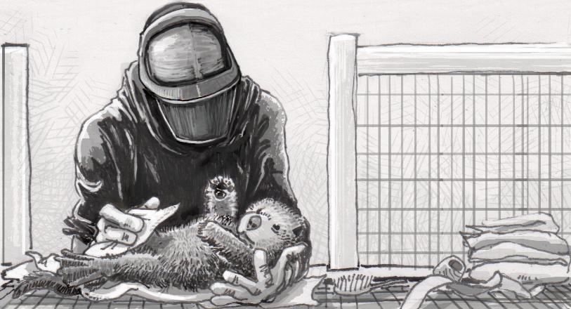 Sea otter orphan and caretaker