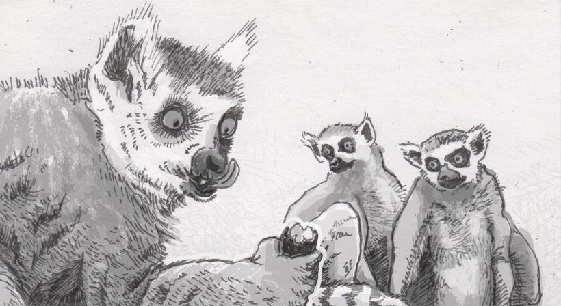 Individual lemurs' social status gets a big lift from learning to grab a grape