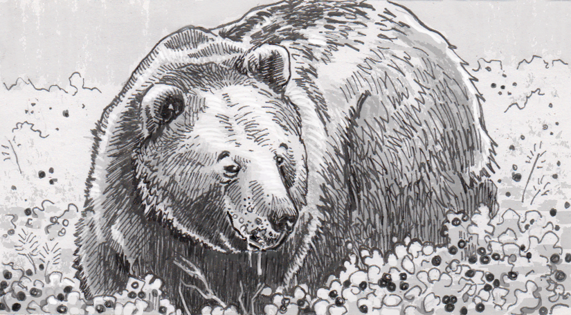 Fossilized, cavity-ridden teeth reveal bears' long history of eating high-sugar foods to prepare for hibernation
