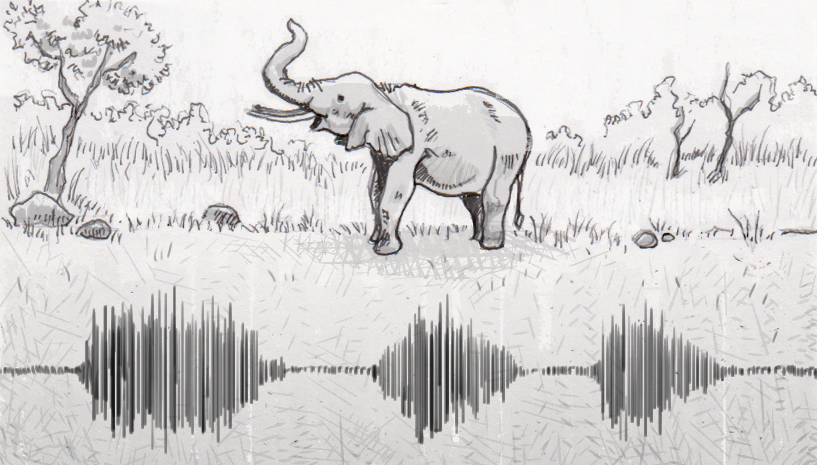 Elephant trumpeting over waveform of its vocalization