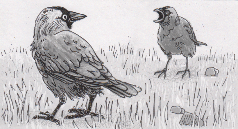 Personal relationships inform jackdaws' responses to warnings about predators