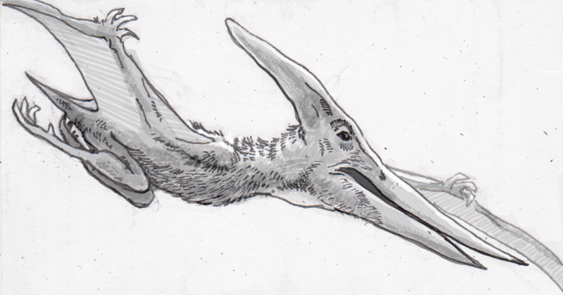 A look at modern quail ligaments suggests that pterosaur legs had a limited range of motion